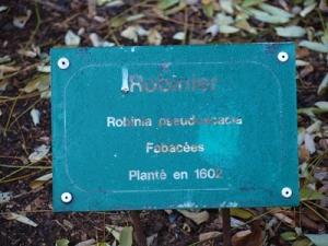 Robinia pseudoacacia label