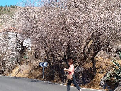 Flowering almonds near Ayacata