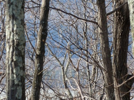 001-wl-early-spring-branches-sky-river-composition-440x330