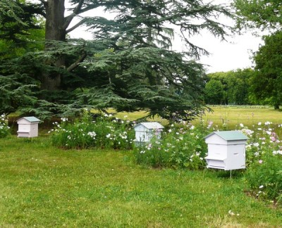Pastel beehives sit amid matching cosmos flowers in the grounds of Chateau de Chaumont