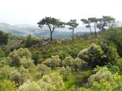 The Ionian landscape is nearly bare of trees, cleared by fire and history