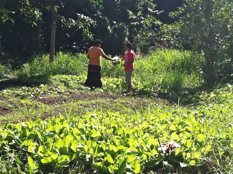 Growing fresh food is essential in Fiji