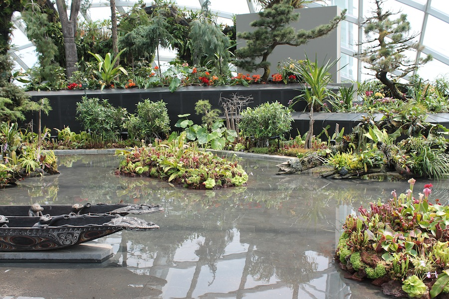 Islands of carnivorous plants