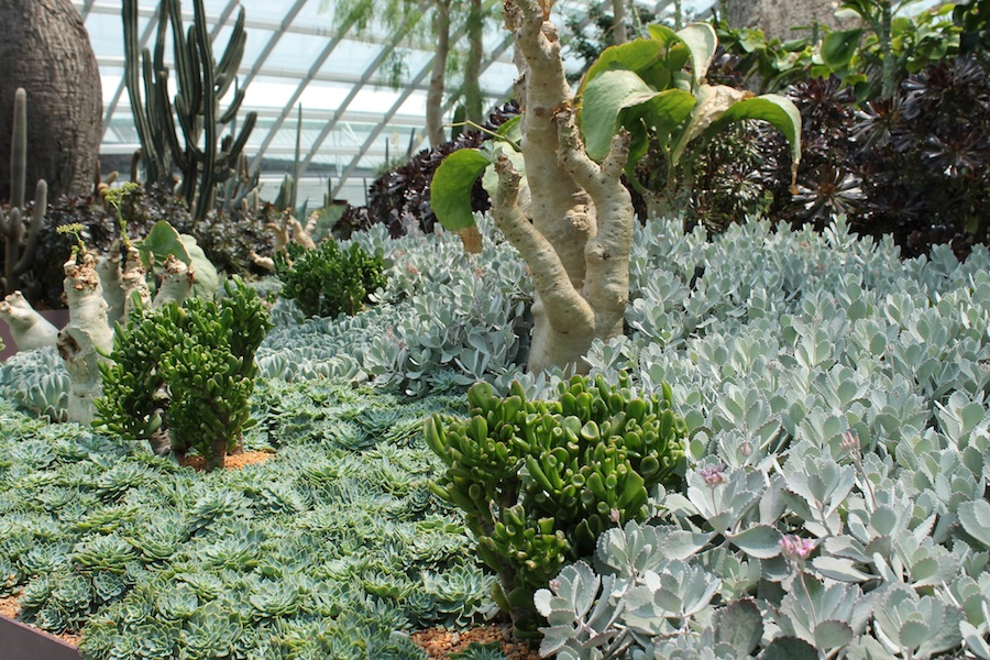 Massed plantings of succulents is visually pleasing