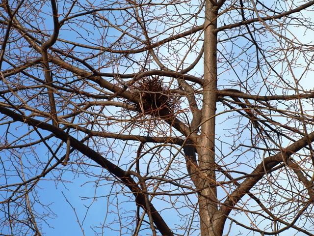 Promenade plantée bird nest