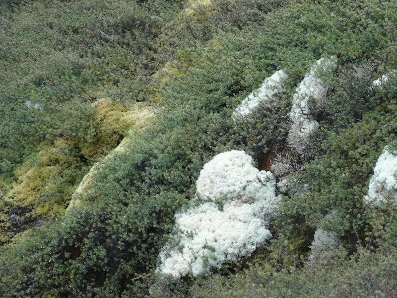 Some kind of strange moss