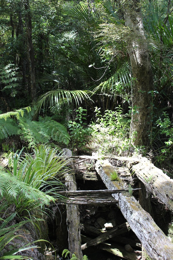 Broken Bridge bush walk, Great Barrier Island