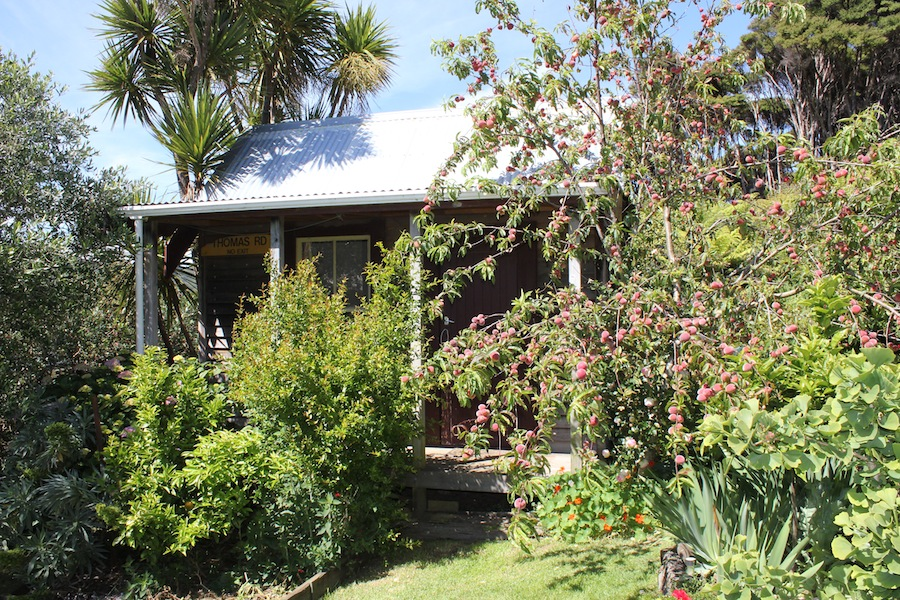 Peaches in a garden at Blind Bay, Great Barrier Island