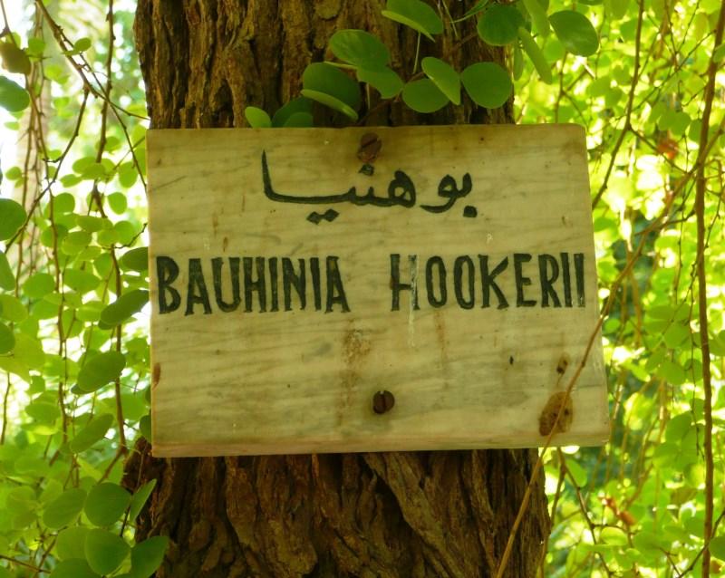 Bauhinia hookeri label
