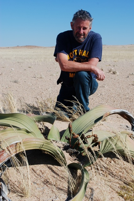 The plant with 2 leaves, Welwitschia mirabilis