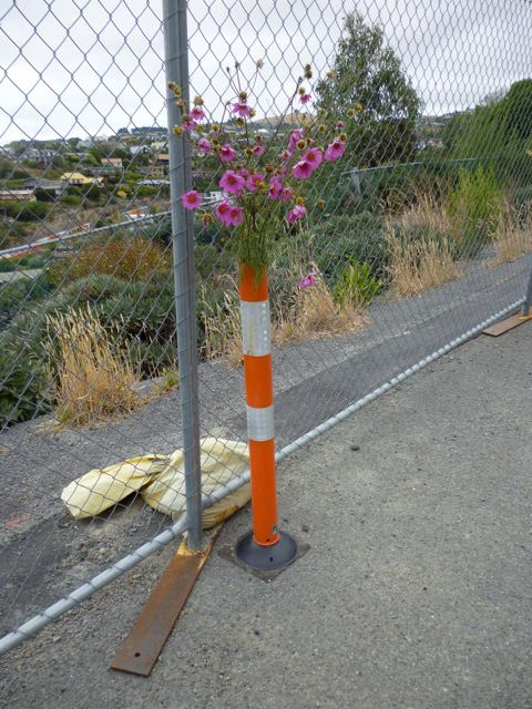 Pink blooms in Christchurch bollards