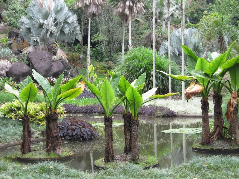 Floating palm islands at Burle Marx's Sitio