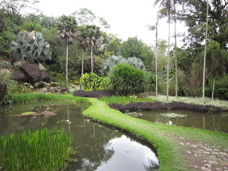 Flowing curves of ponds and paths at Roberto Burle Marx's Sitio