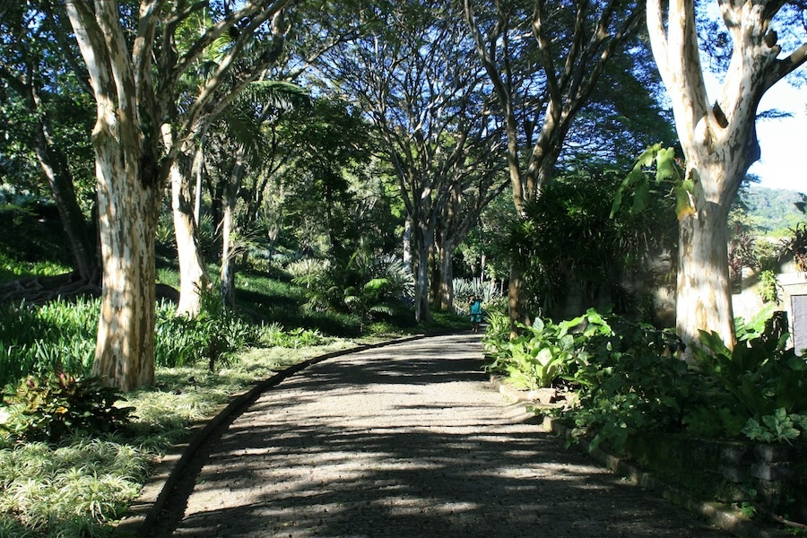 The avenue of leopard trees leading to Burle Marx's Sitio