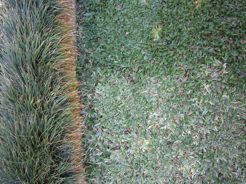 Burle Marx - Edmundo Cavanelas garden Stenotaphrum grass checkboard