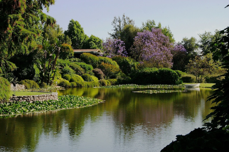 Lake at the Allende garden. Design Juan Grimm