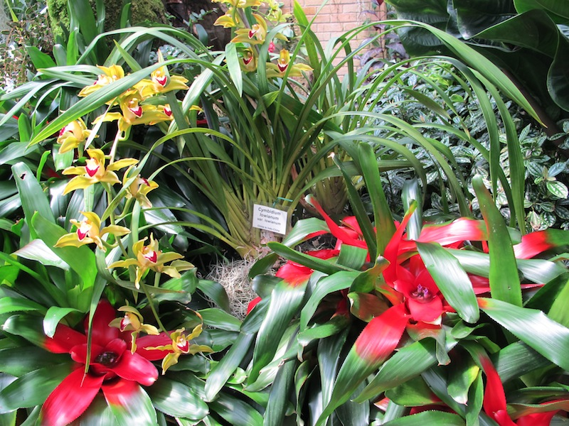 Intermixing of bromeliads, ferns and orchids to create a lush colourful tropical landscape