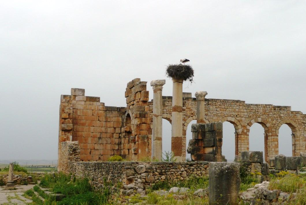 Storks at Volubilis