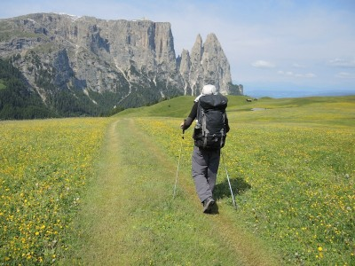 Wildflowers of the Dolomites Feature Image