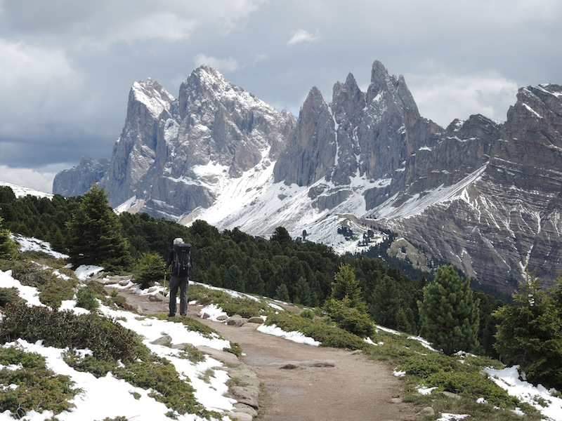 Boundary of subalpine and forest showing stunted trees in the Dolomites