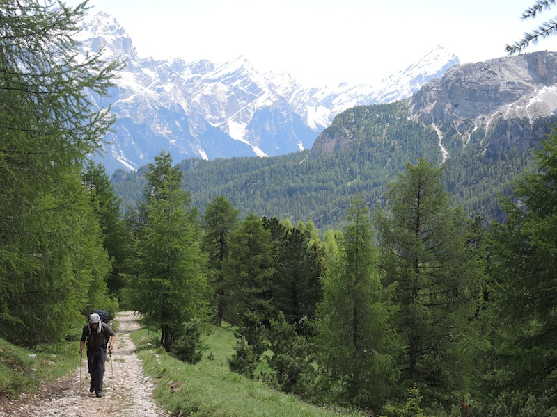 Conifer forest in the Dolomites