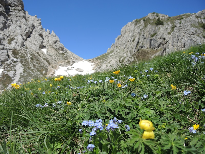 High alpine meadow Dolomites