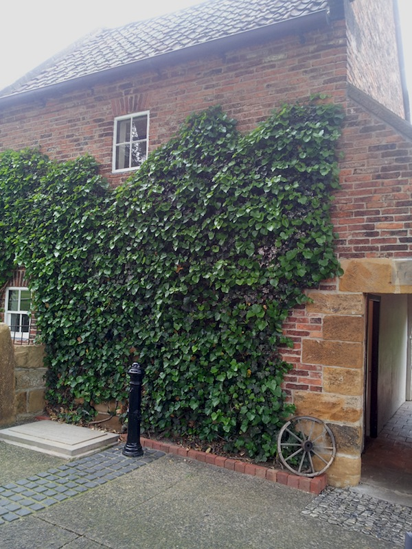Ivy on the wall of Captain Cook's Cottage Fitzroy gardens Melbourne