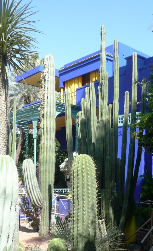 Jardin Majorelle cactus collection