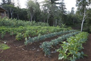 Gardeners' and Gourmets' Tour to Norfolk Island 2014
