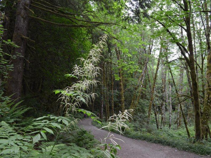 Lake Serene bush walk