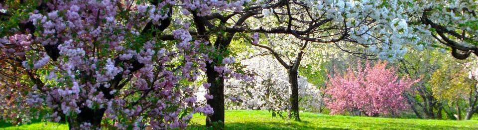 New-York-Botanical-Garden-panorama