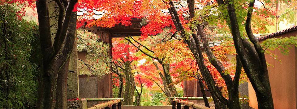 GD1504-BANNER-shutterstock_41309032_Kouetu-temple-in-Kyoto-Japan