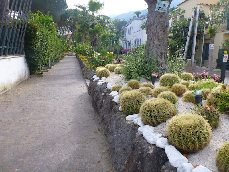Cactus plants on the streets of Ischia, Italy