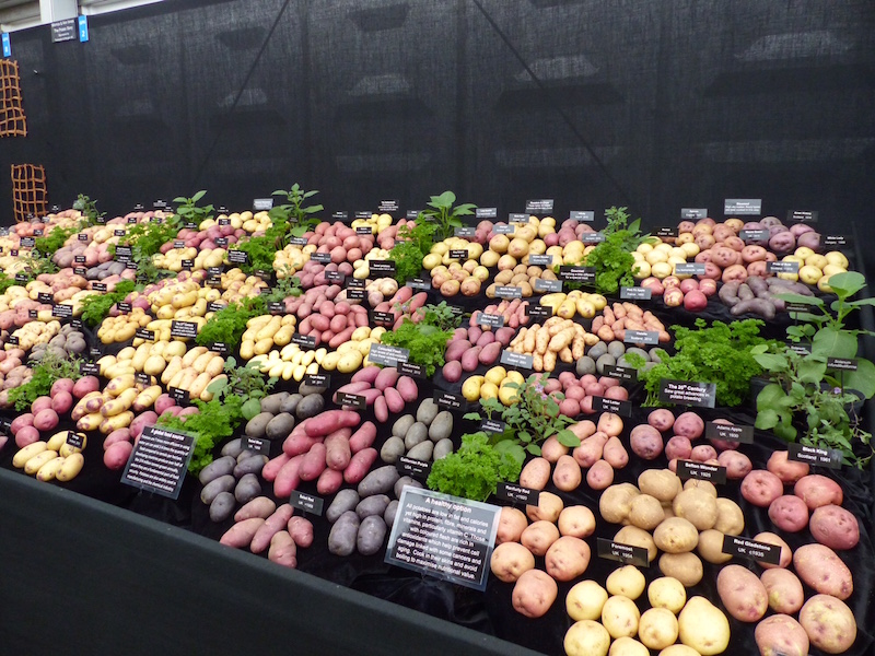 Chelsea Flower Show 2015 extraordinary things to see perfect potatoes