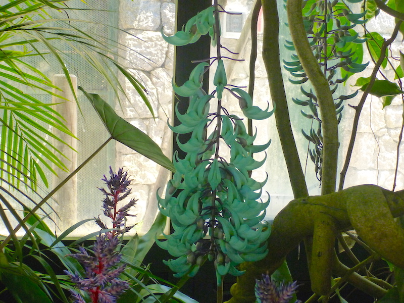 Inside the Orchid House in the garden at La Mortella, Ischia, Italy