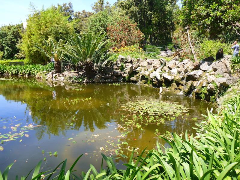 Pond in the garden at La Mortella, Ischia, Italy