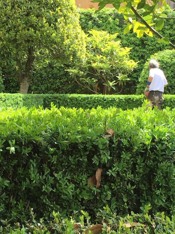 A worker in a garden
