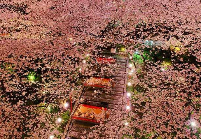 grand prince hotel takanawa japanese garden - Japanese Garden Cherry Blossom Paintings