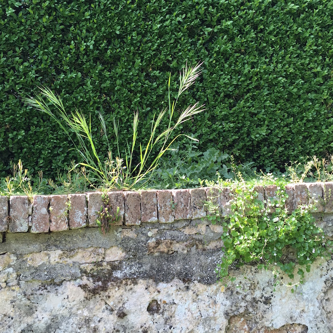 Weeds against a wall