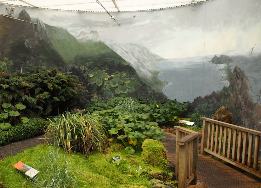 Inside the chilly display of Macquarie Island plants in the Royal Tasmanian Botanic Gardens