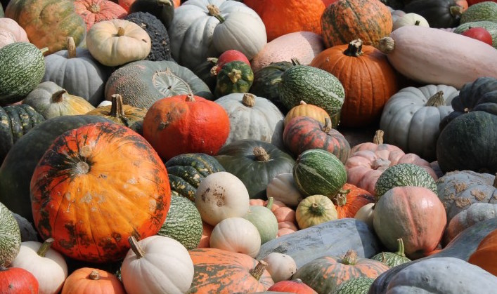 Pumpkins-galore-of-so-many-different-varieties