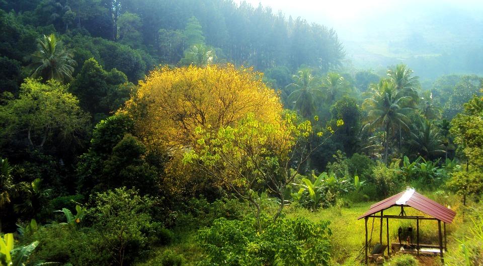 Sri Lanka, near Mawanella