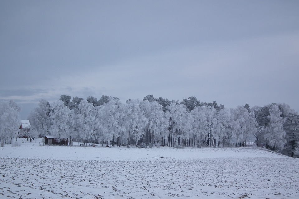 Sweden's landscape in winter