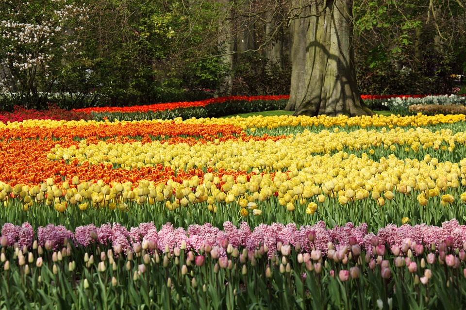 Keukenhof The Netherlands
