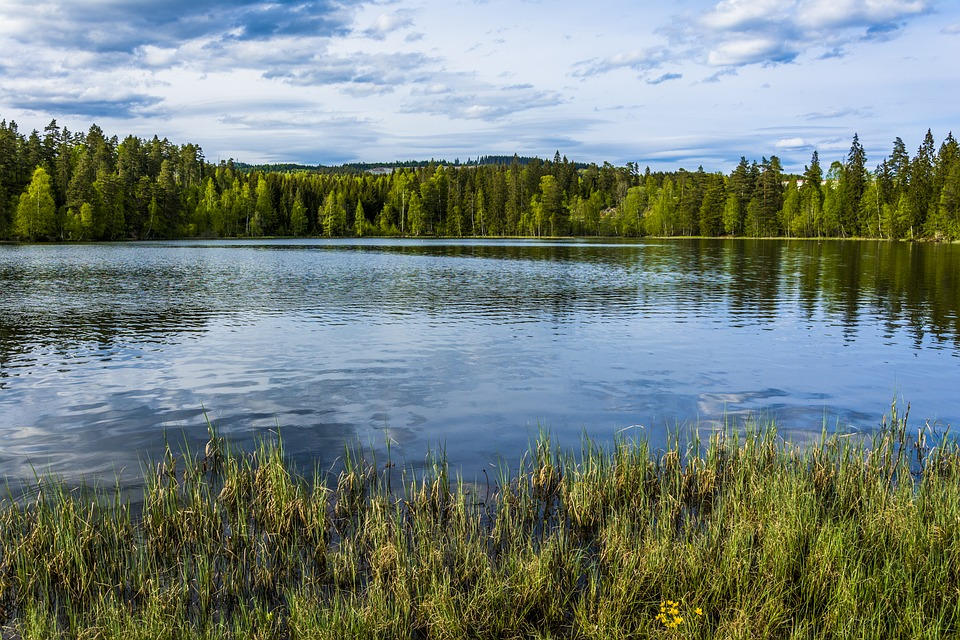 Norwegian lake and coniferous forest
