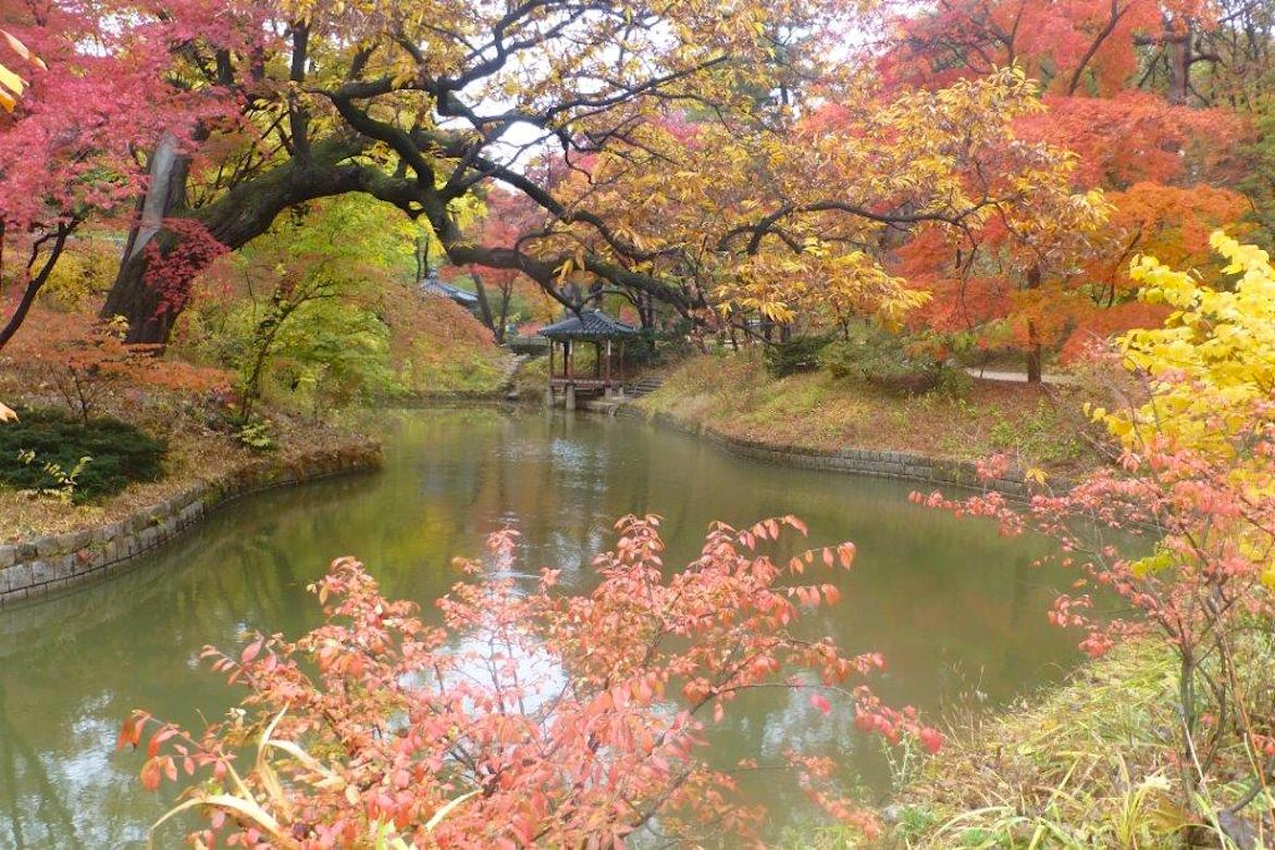 Changdeokgung curved pond and maples Photo Stuart Read