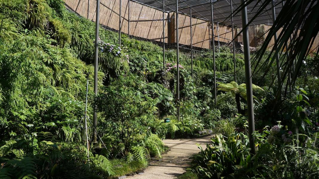 Abundant greenery inside Estufa Fria, Lisbon. Photo Dana Frigerio