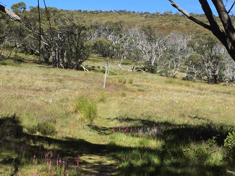Part of the Alpine Track in Kosciuszko National Park