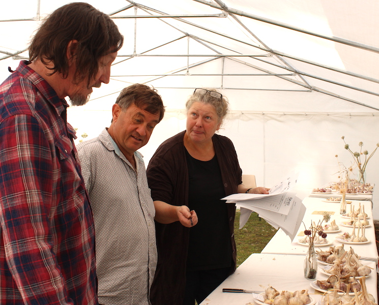 Garlic judging in action. Photo Carey Badcoe