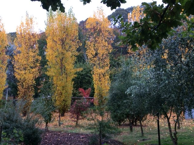 Autumn colour in the garden at Plane Trees